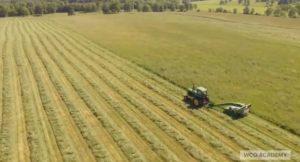 Agricultura e Agroalimentar